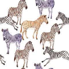 Exotic zebra wild animal pattern in a watercolor style. Full name of the animal: zebra. Aquarelle wild animal for background, texture, wrapper pattern or tattoo.