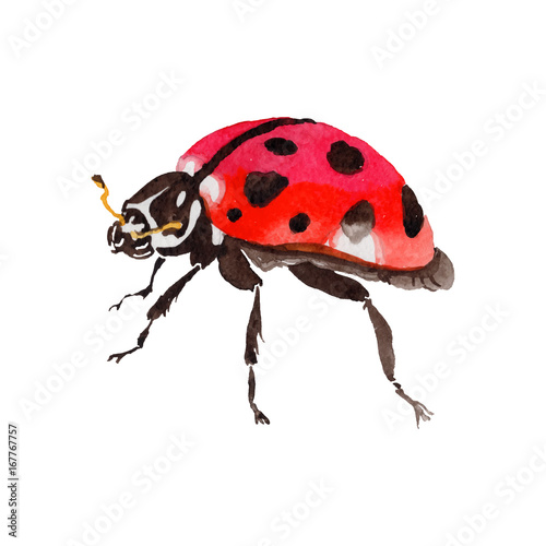 4fca81bd5c124 Exotic ladybug wild insect in a vectorr style isolated. Full name of the  insect: ladybug. Aquarelle wild insect for background, texture, wrapper  pattern or ...