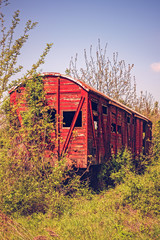 Vintage wooden railway wagon derelict captured by vegetation.