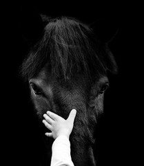 concept: child hand is touching horse head