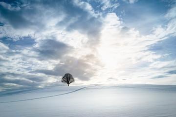 schneebedecktes Feld mit einsamem Baum