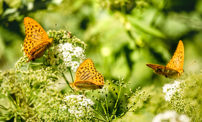 Butterfly sitting on flowers on a background of green grass