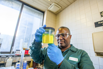 Lab technician looking at beaker of yellow biofuel in biofuel plant laboratory