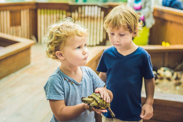 toddlers boy and girl caresses and playing with turtle in the petting zoo. concept of sustainability, love of nature, respect for the world and love for animals. Ecologic, biologic, vegan, vegetarian