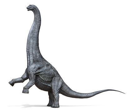 3D rendering of Alamosaurus rising up, isolated on a white background.