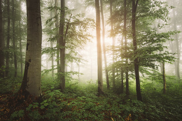 green forest with lush foliage, green vegetation natural landscape