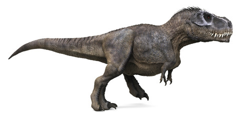 3D rendering of Tyrannosaurus Rex walking, isolated on a white background.