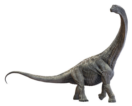 3D rendering of Alamosaurus, isolated on a white background.