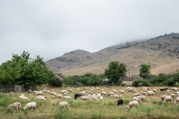 Herds of sheep in  Macin mountains, Dobrogea county, Romania; spring day