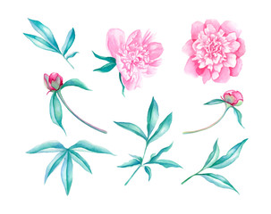 Peonies flower elements illustration set in watercolor style