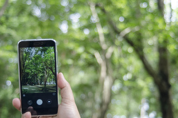 mobile camera in tree forest