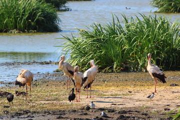 Ecosistema de Doñana