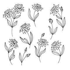 vector contour set of flowers and leaves