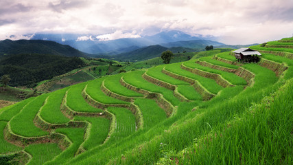 Papiers peints Les champs de riz Green terrace rice field in Chiangmai , Thailand