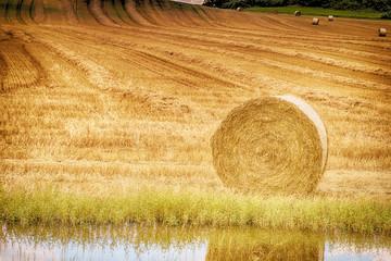Fotoväggar - Landschaft im Sommer, abgeerntetes Kornfeld, Strohballen