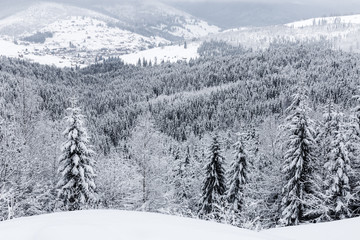 Winter landscape, snow-covered firs in the mountains. Background image