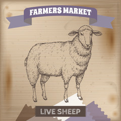 Vintage farmers market label with live sheep.