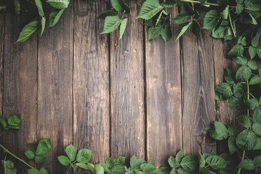 Green Ivy background around old wood