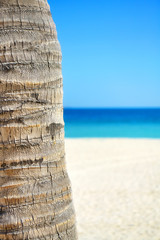Close up picture of a coconut palm tree trunk with blurred beach in distance, natural background with copy space.