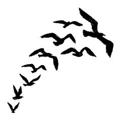 Seagulls - Silhouette of Flying Birds