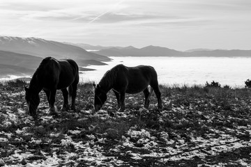 Two horses pasturing on top of a mountain over a sea of fog, with some distant and misty mountains on the background