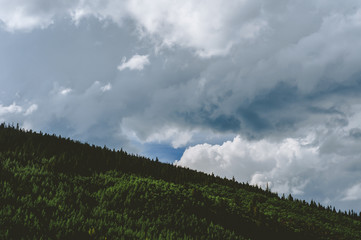Alpine trees contrasting the big clouds on a blue sky