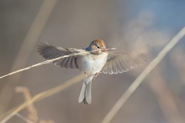Bird nipping at a branch