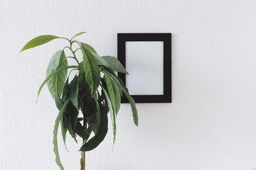 Mock up photo black frame with avocado plant. home decor