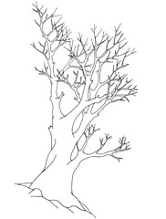 Big old tree with detailed twigs, without leaves. Contour vector illustration. Black pen drawing.