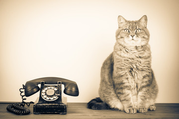 Retro old telephone and big cat on table. Vintage style sepia photo Wall mural