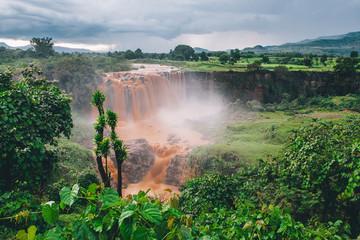 In de dag Olijf Nacimento del Nilo Azul. Etiopia