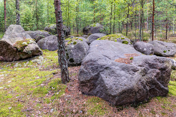 rocks in forest
