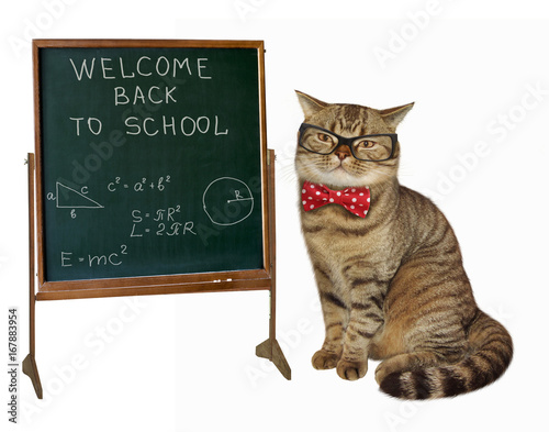 the cat teacher with glasses and a bow tie is sitting next to a