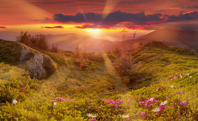 In de dag Baksteen Amazing colorful sunrise in mountains with colored clouds and pink rhododendron flowers on foreground. Dramatic colorful scene with flowers in mountains