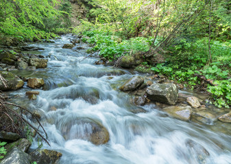 Mountain stream. Summer landscape in forest.