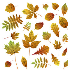 Collection of autumn colorful leaf silhouettes on white background.