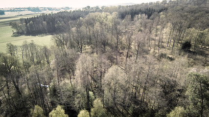 Aerial View Of Forest In Spring