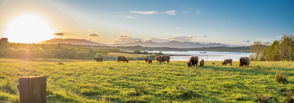 Highland cow with a scottish loch in the background