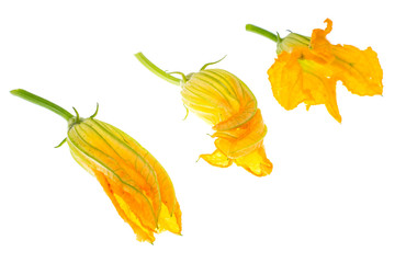 Yellow pumpkin and zucchini flowers isolated on white background