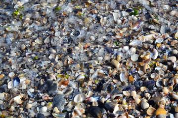 Ocean shells coast waves summertime resort 1