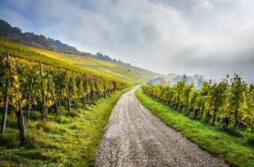 Weinberg mit Straße am Rehberger-Weg bei Weil am Rhein / Baden-Württemberg im Herbst