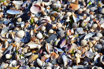 Ocean shells coast waves summertime resort 2