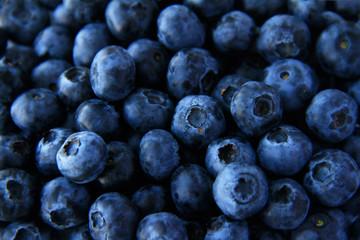 Blueberry full frame use for background