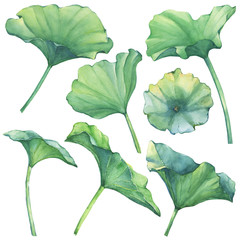 Set with lotus leaves (water lily, Indian lotus, sacred lotus, Egyptian lotus). Watercolor hand drawn painting illustration isolated on white background.