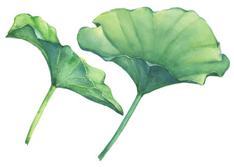 Lotus leaves (water lily, Indian lotus, sacred lotus). Watercolor hand drawn painting illustration isolated on white background. For invitations, greeting cards, textile design, package, patterns.