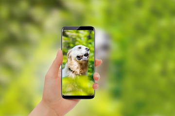 Girl hand taking photo of golden retriever with modern smartphone
