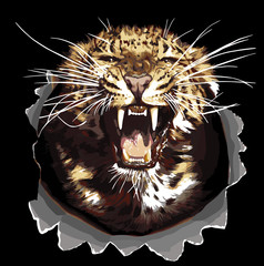 Vector Jaguar head isolated on black background. Angry leopard or jaguar roaring with bared teeth and aggressive glare. Wild big cat for t-shirt print, tattoo design or sticker on racing transport