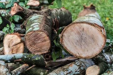 Deforestation / Brazilian forest.