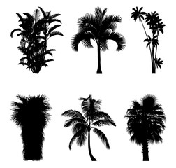 Tropical trees and palm trees silhouettes for architectural compositions with backgrounds. Vector illustration