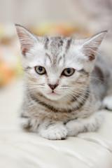 Young little kitten